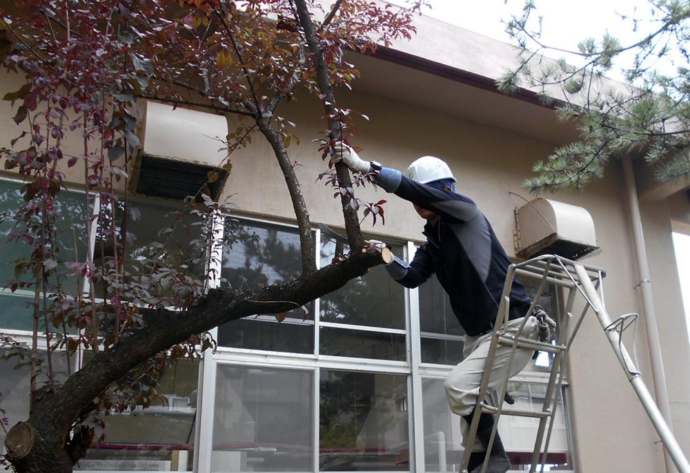 建物脇の不要な木を伐採し、室内からの見通しを良くします
