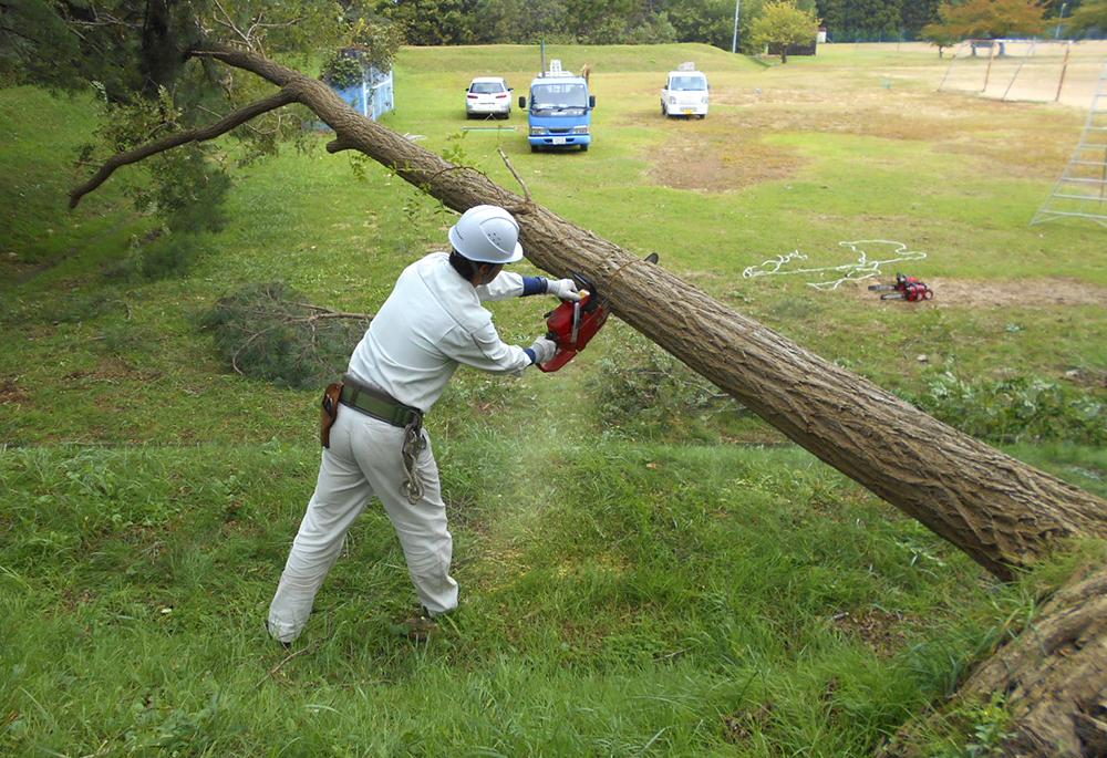 台風の影響で倒木した危険木を伐採